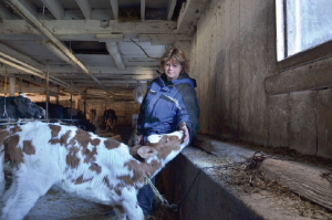 Carol French on her dairy farm, taking care of her milk cows. (Image: Dimiter Kenarov)